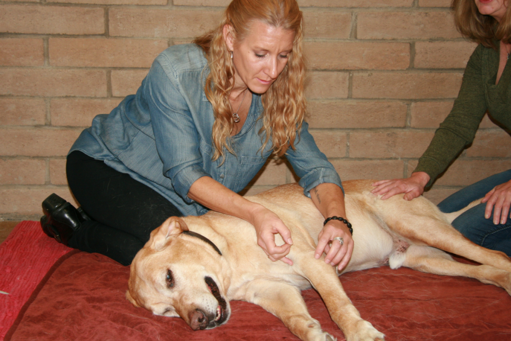 Acupuncture by Dr. Leslie Baldner